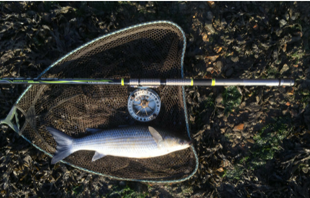 Activa VX 6006 1.2 m closed 20g float wt max 8 lb tippets ideal for mullet