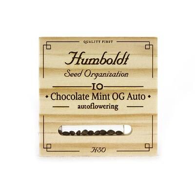 Chocolate Mint OG Auto 3 SEEDS