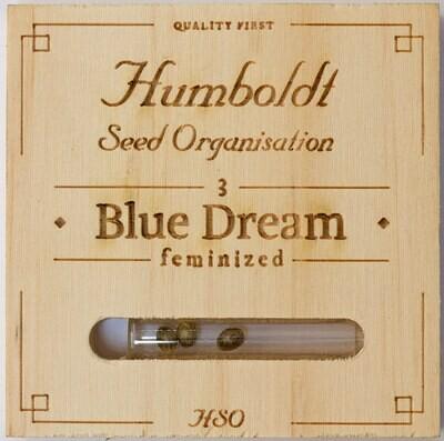 Blue Dream Auto 3 SEEDS