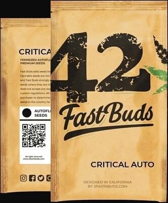 Original Auto Critical