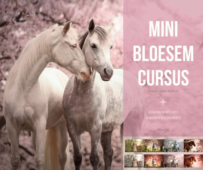 Mini bloesem cursus