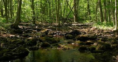 Water 2, Creek