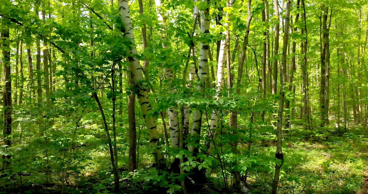Forests and Trees - 2