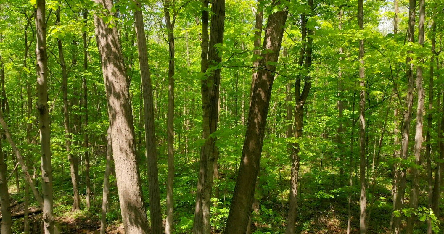Forests and Trees - 3