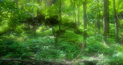 Forests and Trees - 4