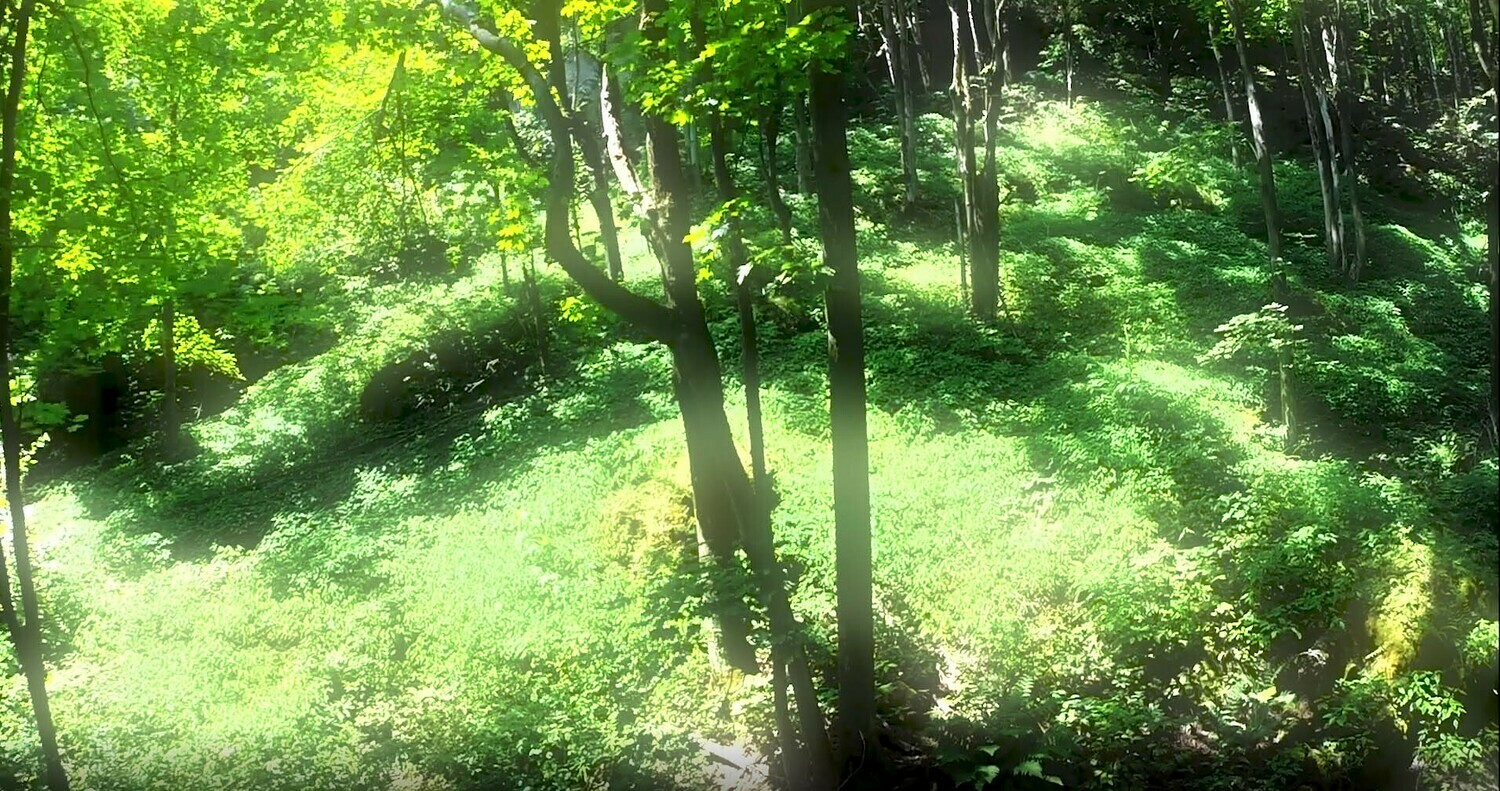 Forests and Trees -8