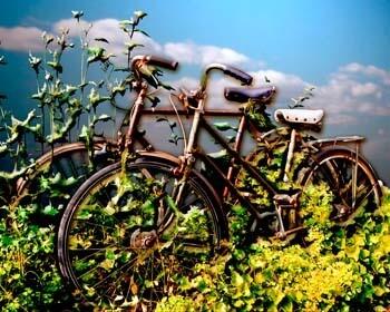 Forgotten Bikes in Blue