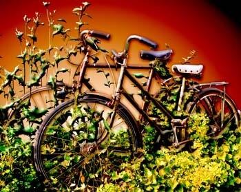 Forgotten Bikes in Red