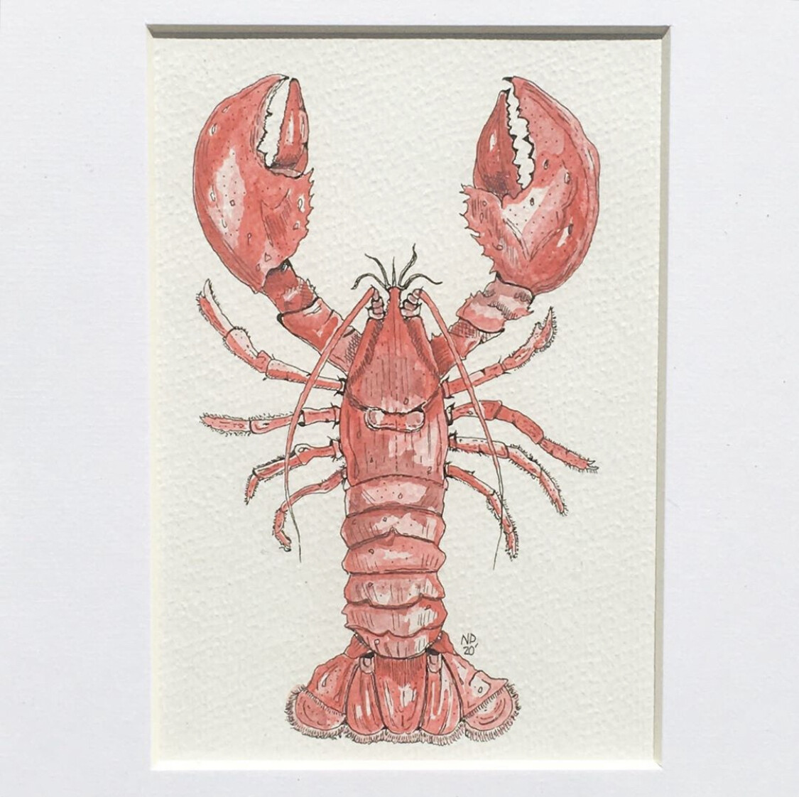 Lobster Print Framed