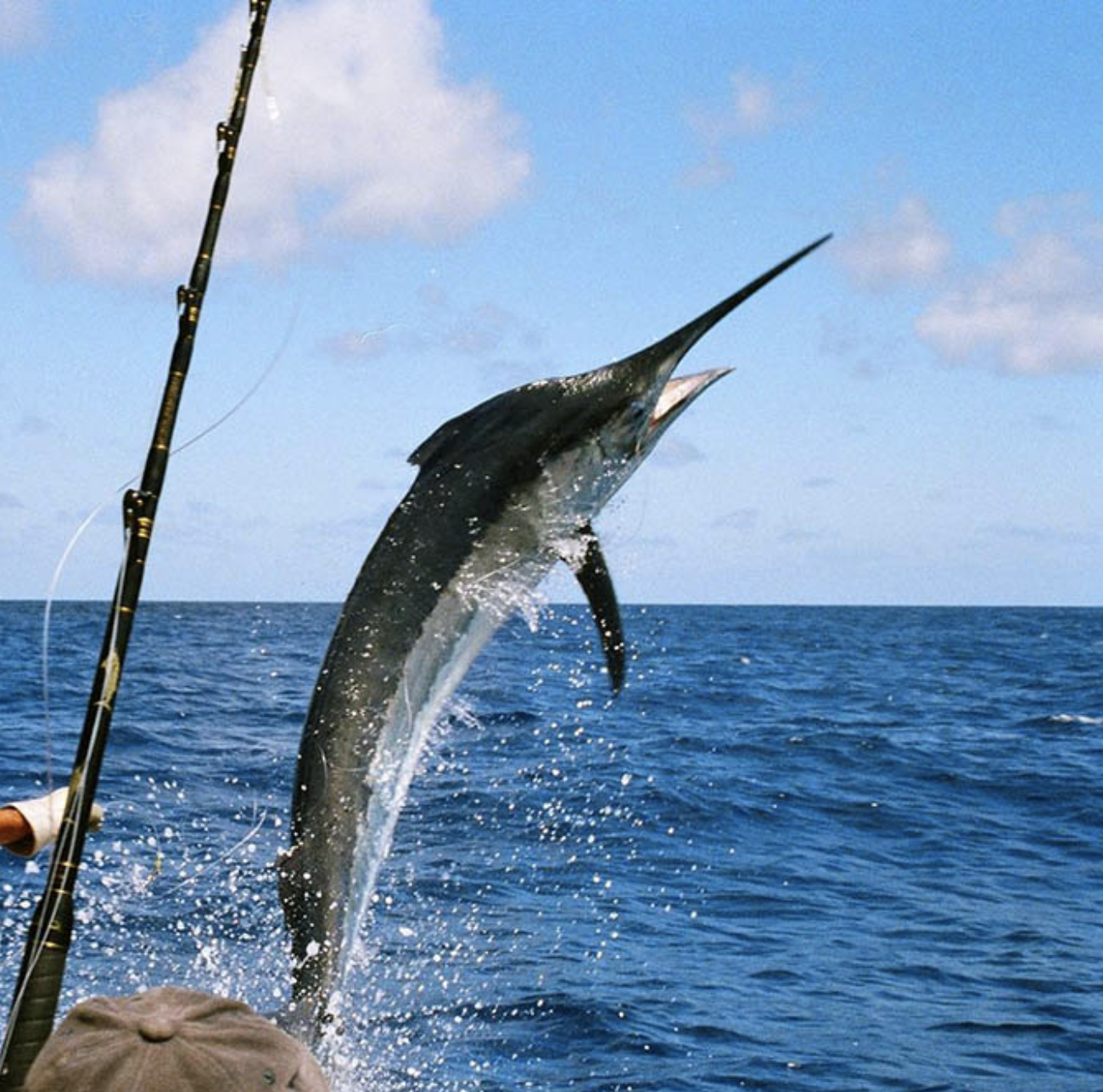 DEEP SEA FISHING / PESCA DEPORTIVA