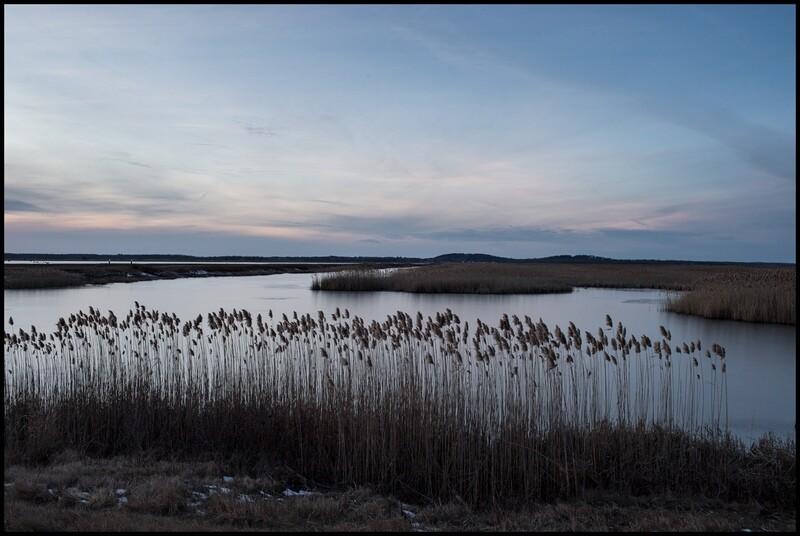 Parker River Reserve - Newbury, MA