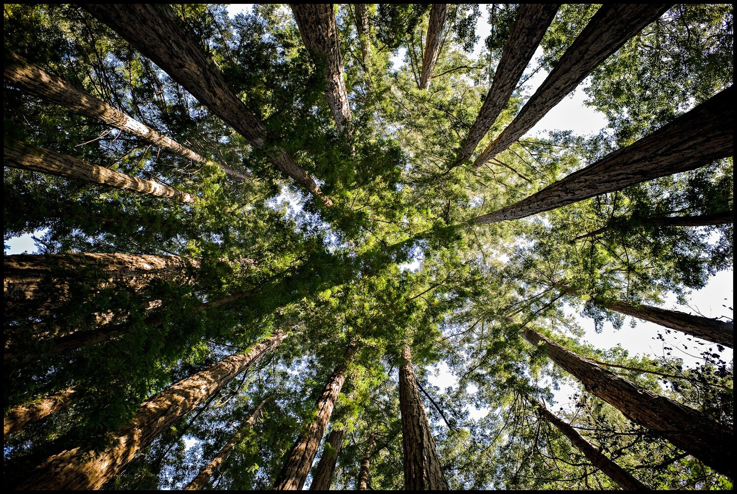 Circle of Life, Redwoods - Big Sur, CA
