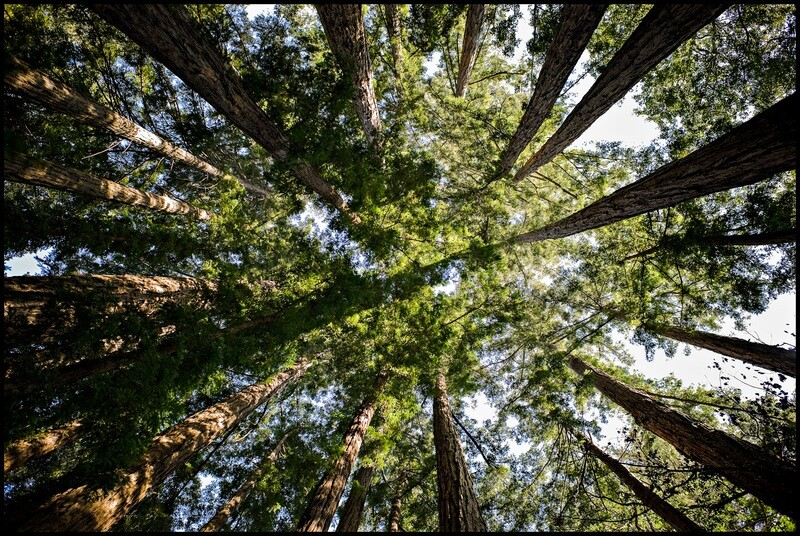 Circle of Life, Redwoods - Big Sur, CA