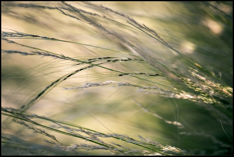 Grasses - Marfa, TX