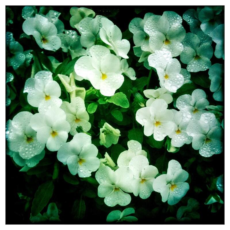 Wildflowers - Gruene, TX