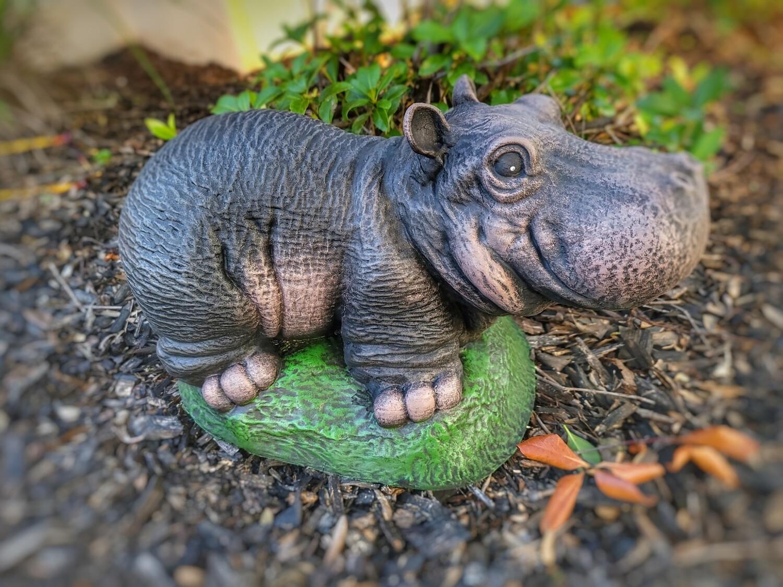 Adorable Hippo