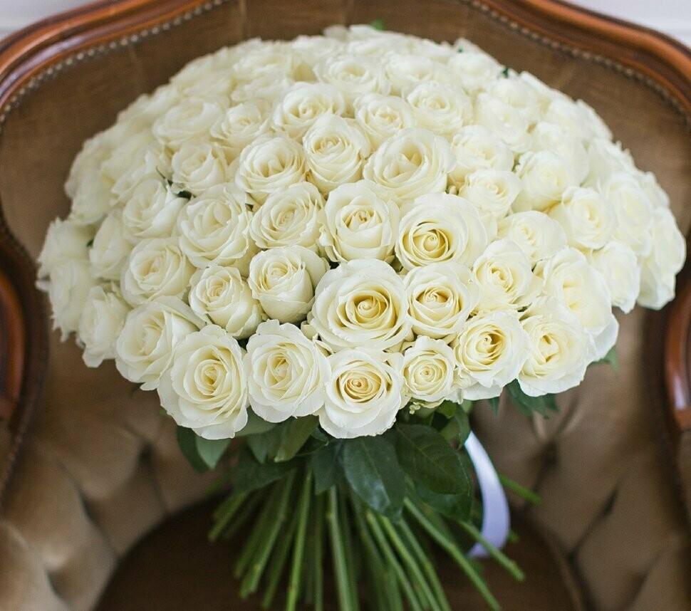 101 роза (Россия) Вайт Наоми