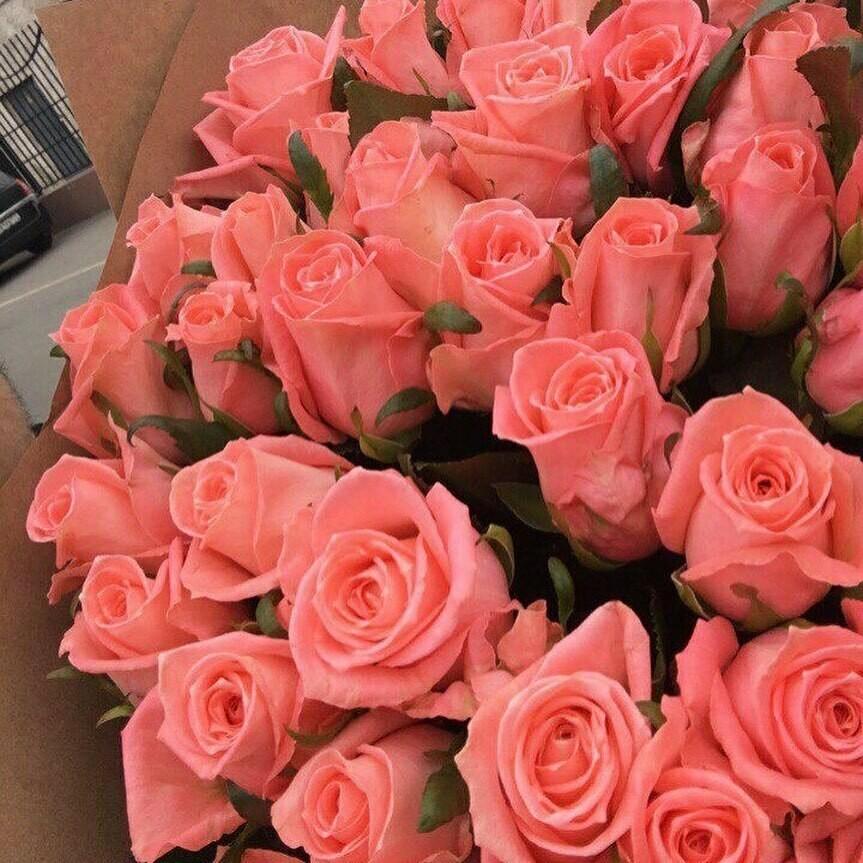 51 роза (Россия) Анна Карина