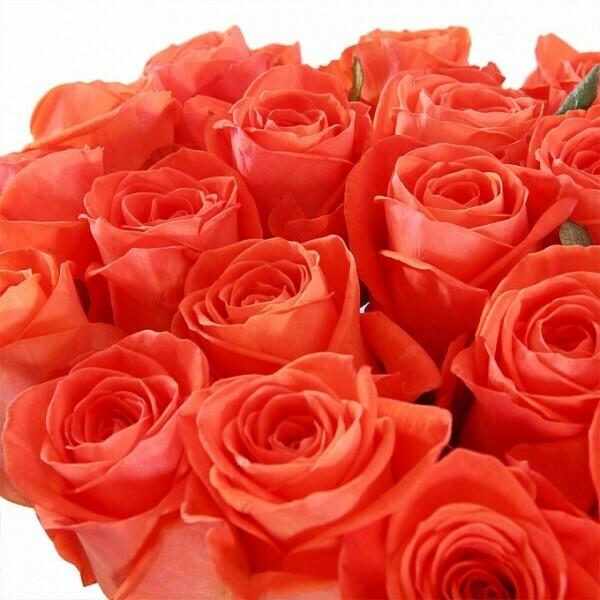 51 яркая роза (Россия) 60 см