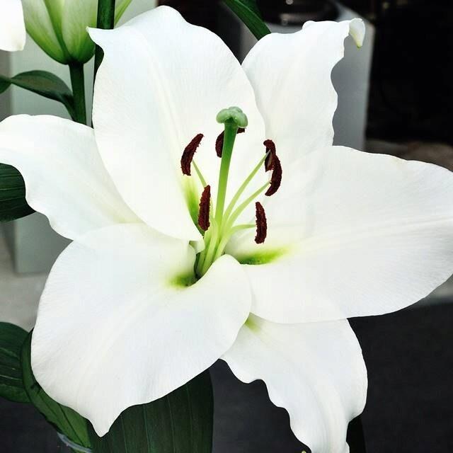 Лилия белая 1 шт