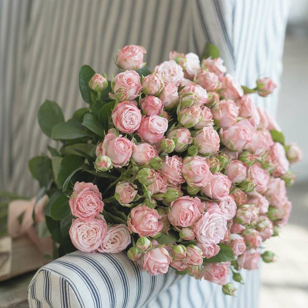 17 кустовых пионовидных нежно-розовых роз