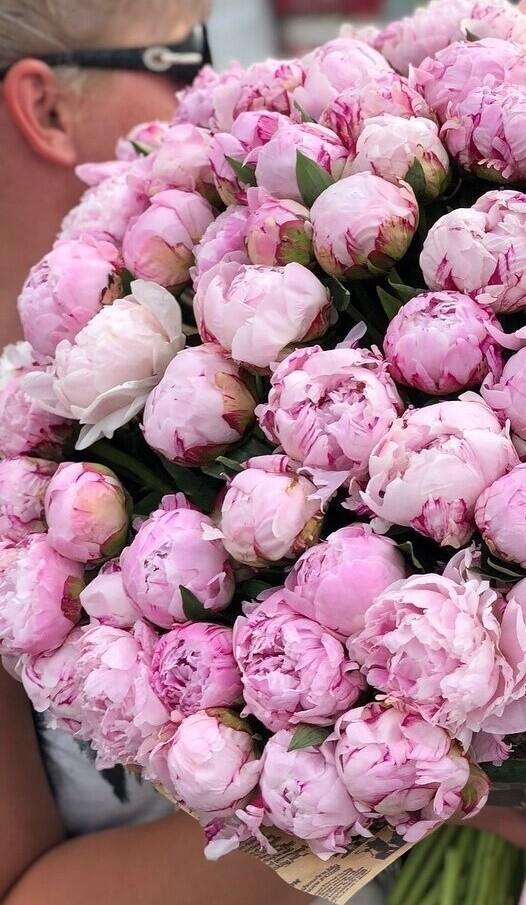 101 нежно-розовый пион