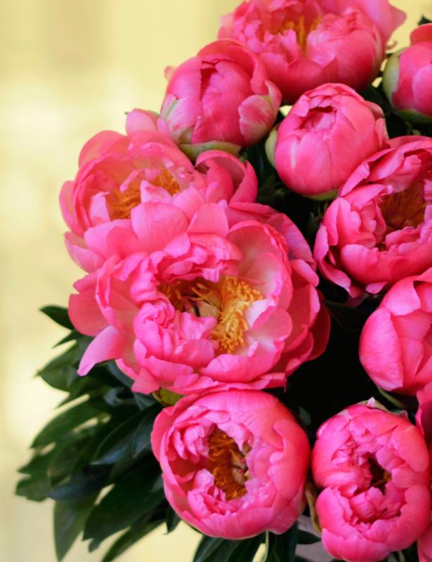 15 насыщенно-розовых пионов