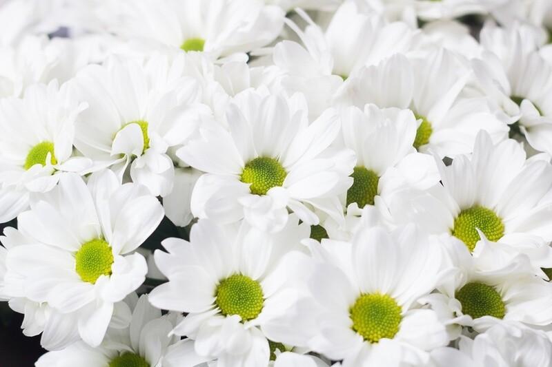 """Букет белых кустовых хризантем """"Альхена"""""""