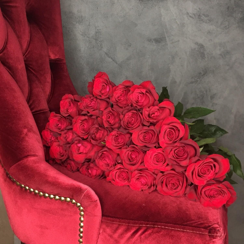 Роза Эксплорер в наличии