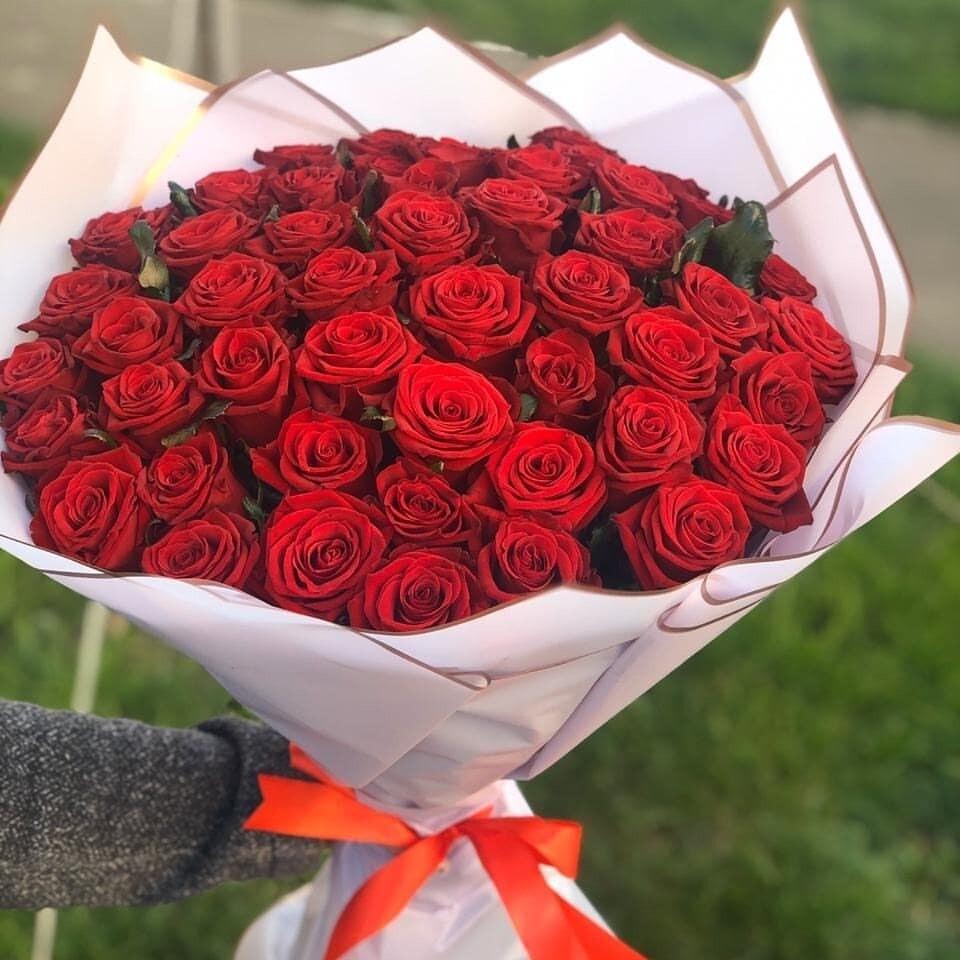 51 роза (Эквадор) Эсплорер 60 см