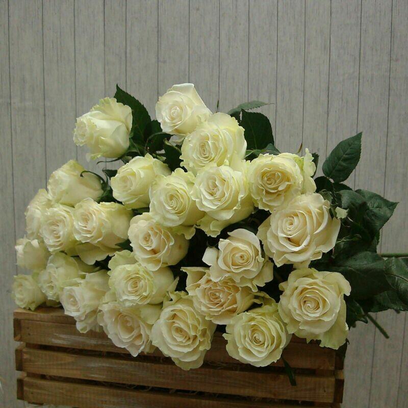 25 белых роз Мондиаль 60 см
