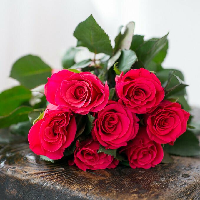 7 малиновых роз Эквадор 60см