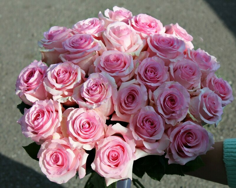25 нежных роз Эквадор