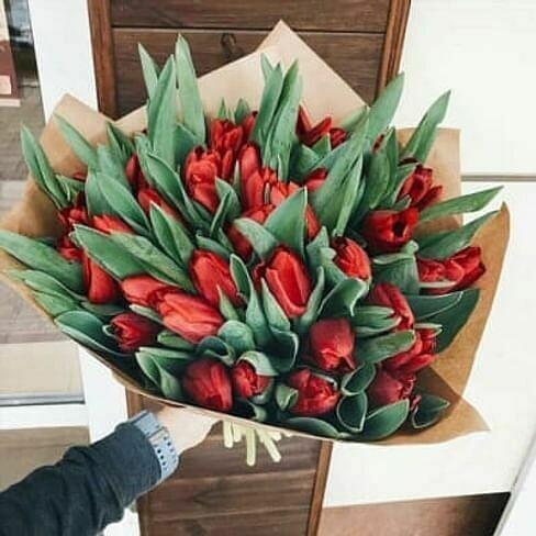41 красный тюльпан