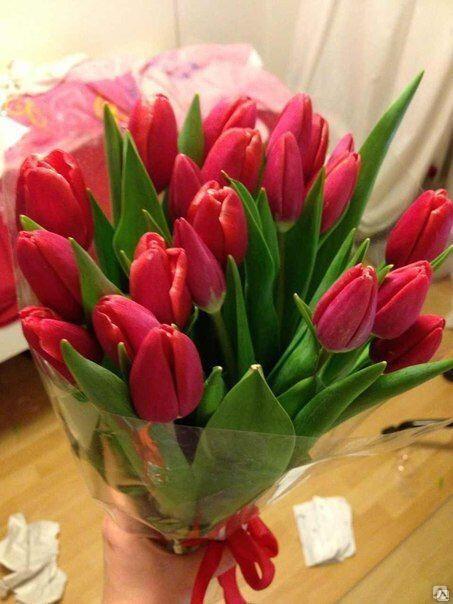 21 малиновый тюльпан