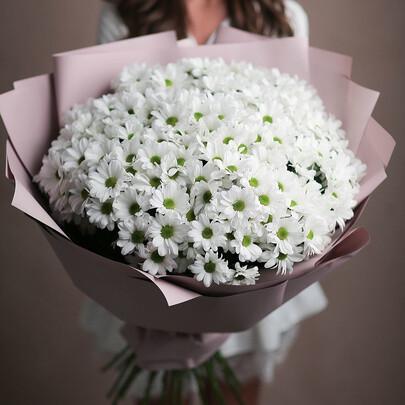25 белых кустовых хризантем