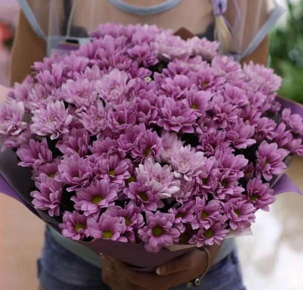 11 сиреневых кустовых хризантем