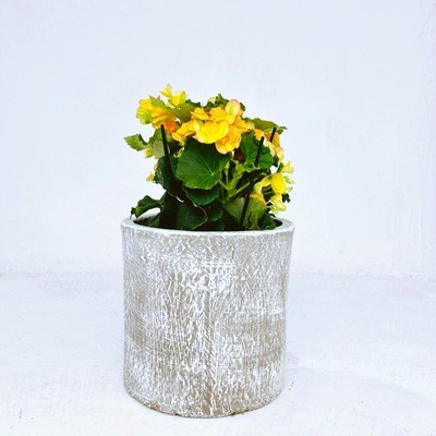 Cylinder Pot Medium Whitewash - H270mm x W280mm - 7kg