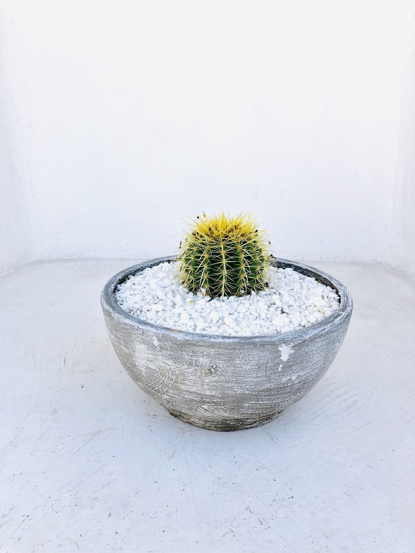 Rock Rose Cactus and Succulent Bowl Whitewash Finish - H200mm x W420mm - 8kg