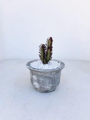 Crown Cactus and Succulent Bowl Whitewash Finish - H200mm x W290mm - 4kg