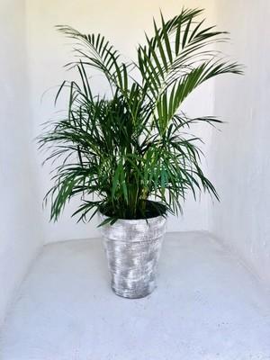 Jade Pot Medium Whitewash Finish - H450mm x W380mm - 10kg