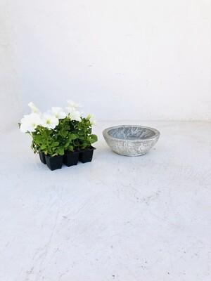 Crassula & Cactus Pot Small Whitewash Finish - H90mm x W240mm - 2kg