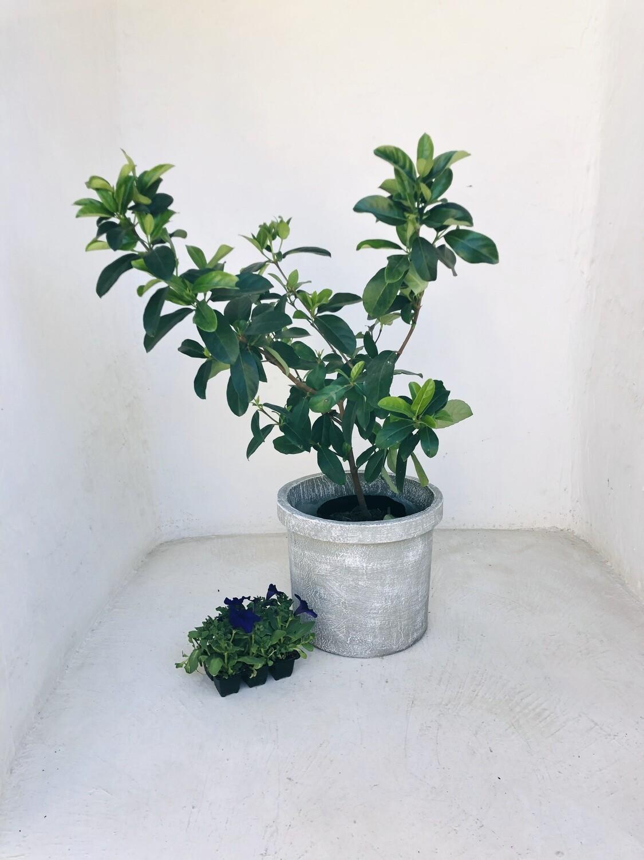 Concrete Planter Pot Large Whitewash Finish - H330 x W390mm - 13kg