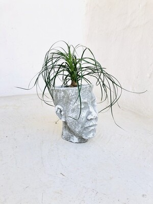 Half Head Planter Medium Whitewash Finish - H240mm x W150mm - 2.86kg