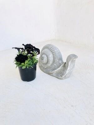 Snail Large Whitewash Finish - L400mm x H200mm - 13kg