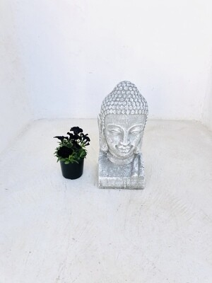 Buddha Head Whitewash Finish - H500mm - 13kg