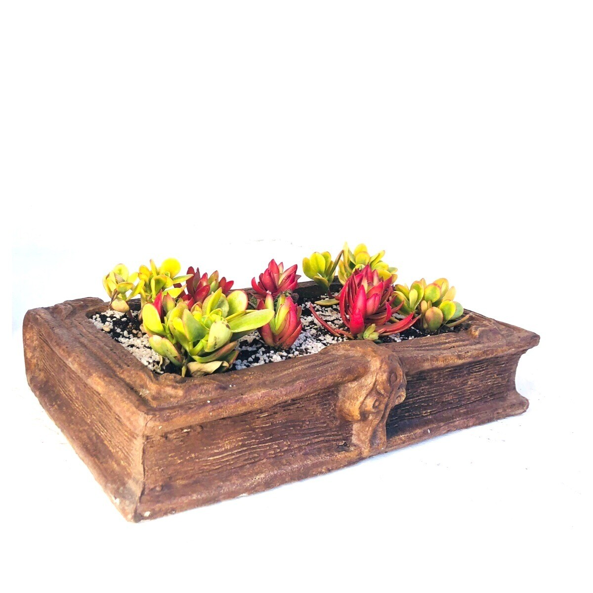 Daisy Book Planter Honeyclay Finish - L510mm x H60mm x W350mm - 12kg