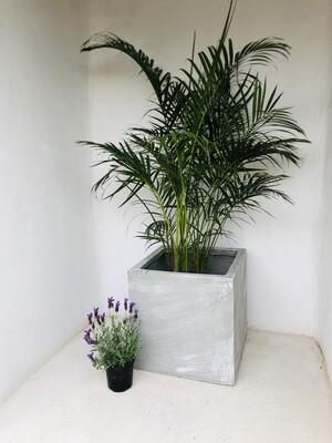 Ondela Square Pot Extra Large Whitewash Finish - H500mm x L500mm x W500mm - 45kg