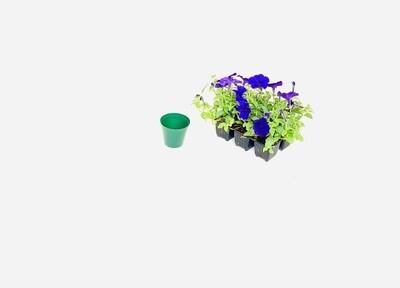 7.5cm Pot Green Width 7,5cm x Height 6,5cm