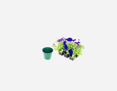 10cm Pot Green Width 10cm x Height 8,5cm